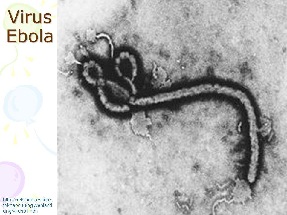 Virus Ebola http://vietsciences.free.fr/khaocuu/nguyenlandung/virus01.htm