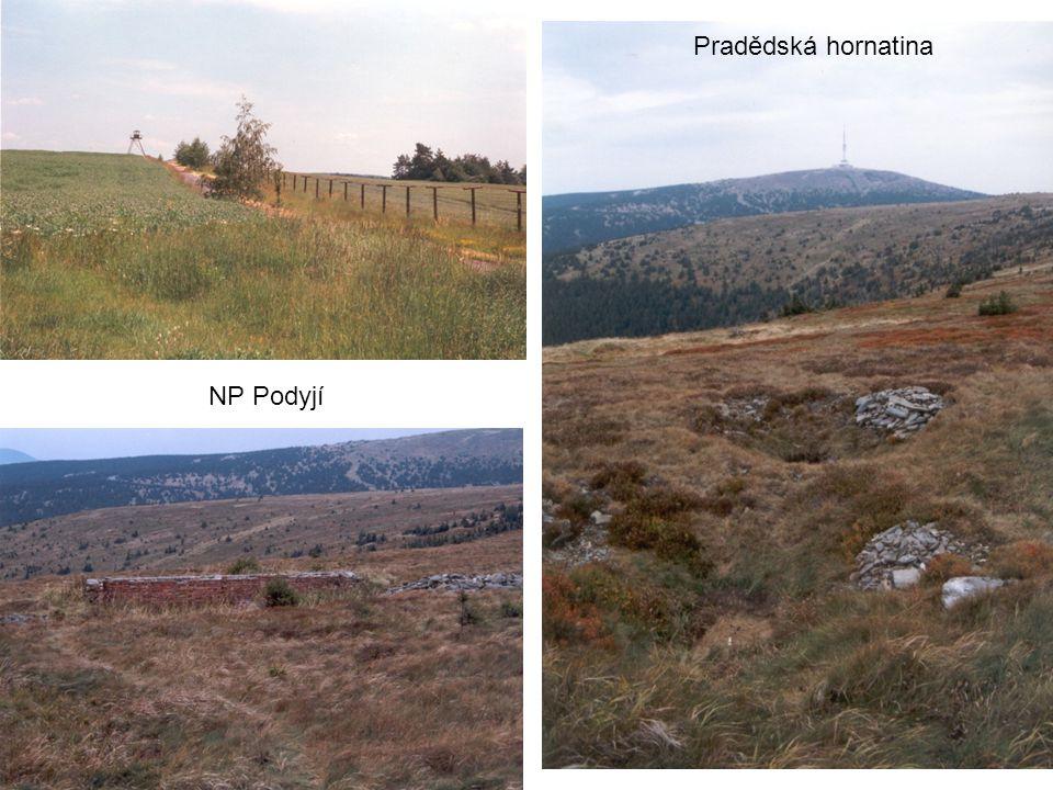Pradědská hornatina NP Podyjí