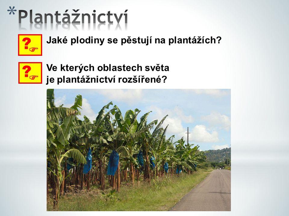 Plantážnictví   Jaké plodiny se pěstují na plantážích