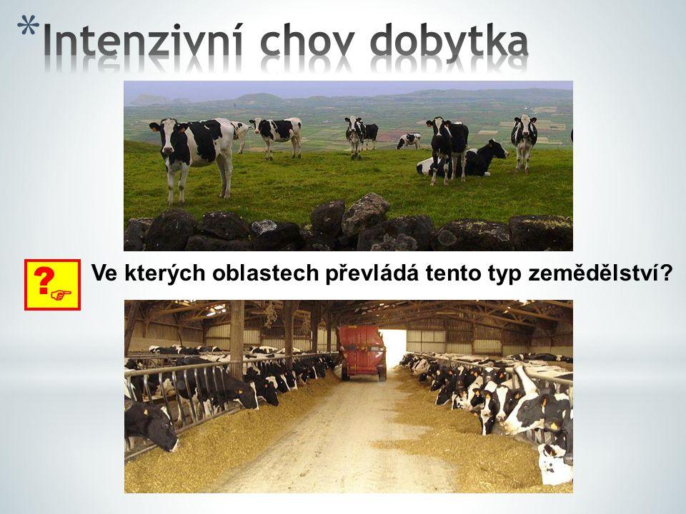 Intenzivní chov dobytka