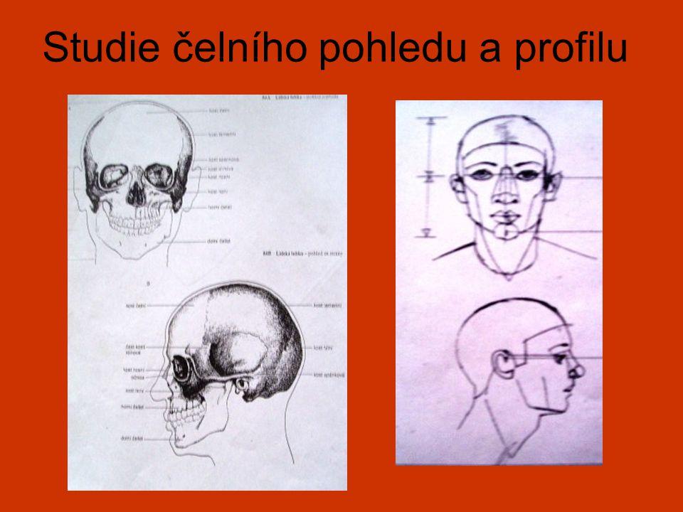 Studie čelního pohledu a profilu
