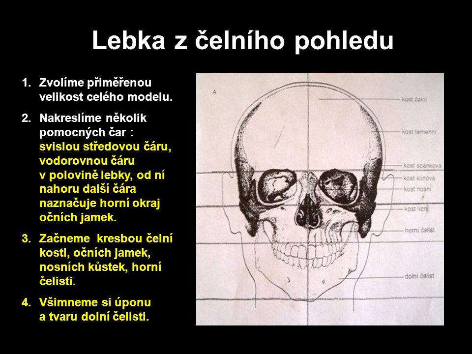 Lebka z čelního pohledu