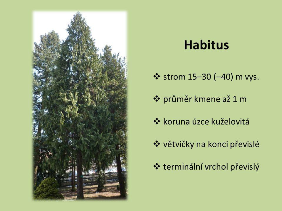 Habitus strom 15–30 (–40) m vys. průměr kmene až 1 m