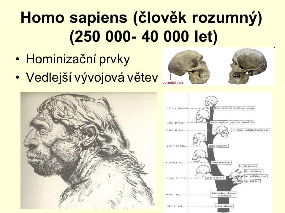 Homo sapiens (člověk rozumný) (250 000- 40 000 let)