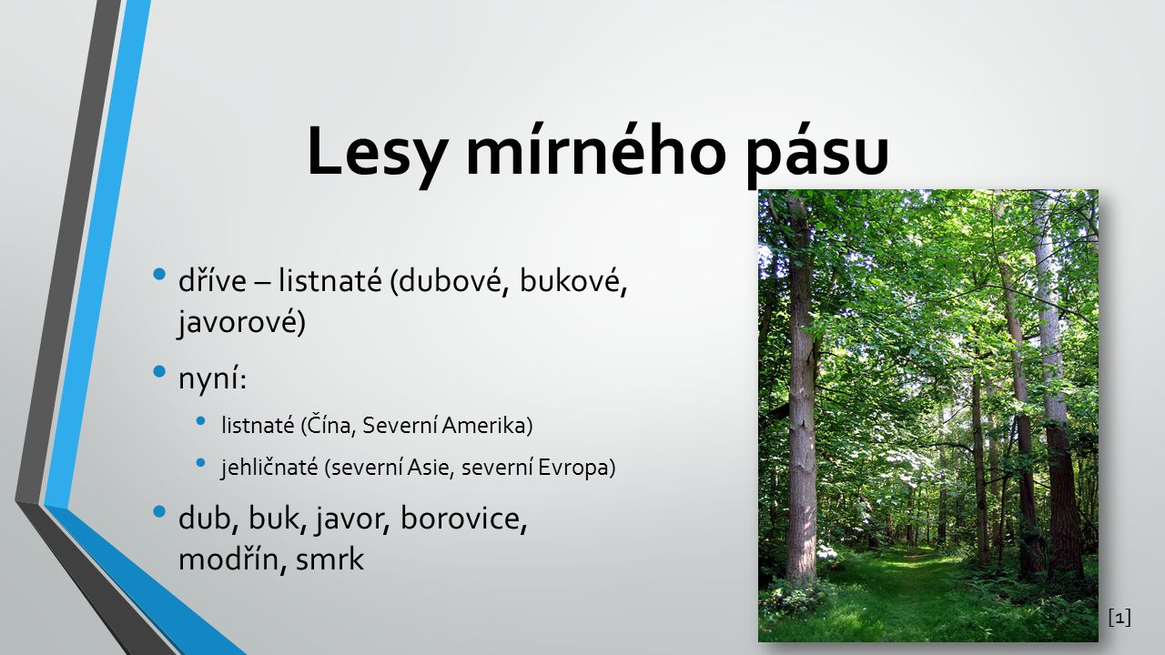 Lesy mírného pásu dříve – listnaté (dubové, bukové, javorové) nyní: