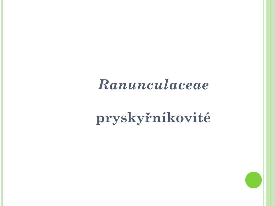 Ranunculaceae pryskyřníkovité
