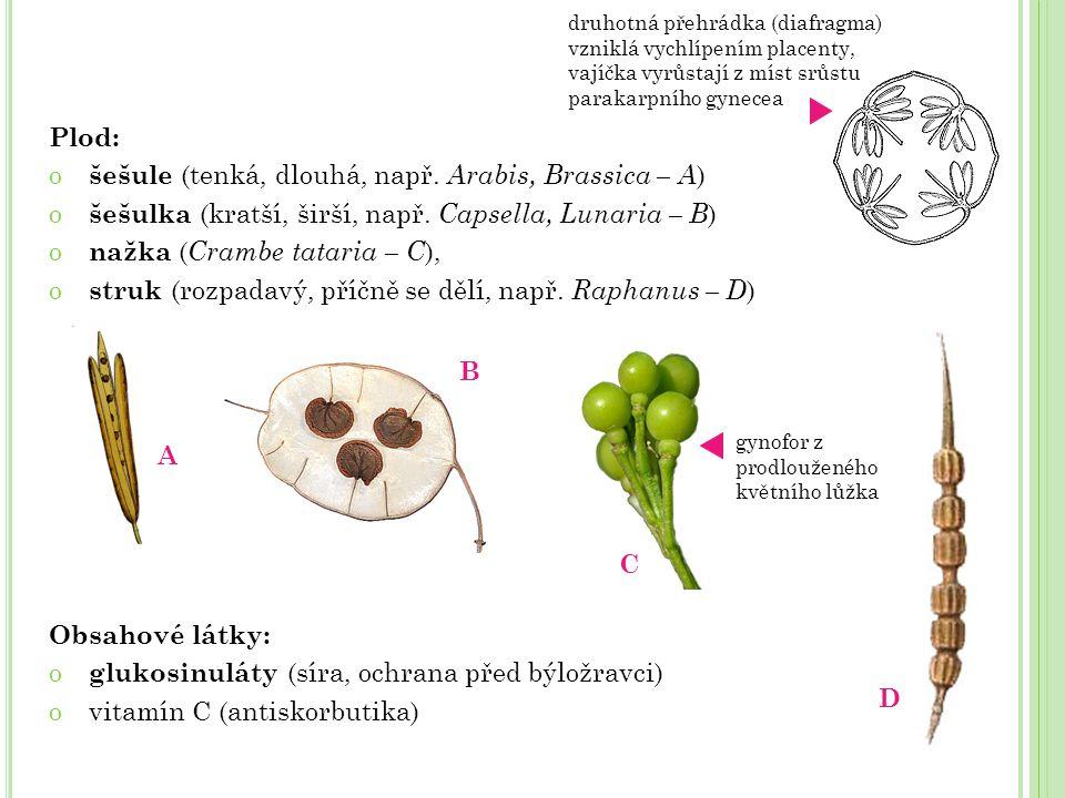 šešule (tenká, dlouhá, např. Arabis, Brassica – A)