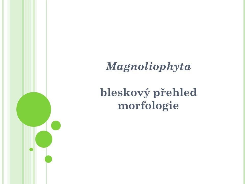 Magnoliophyta bleskový přehled morfologie