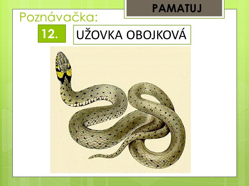 PAMATUJ Poznávačka: 12. UŽOVKA OBOJKOVÁ