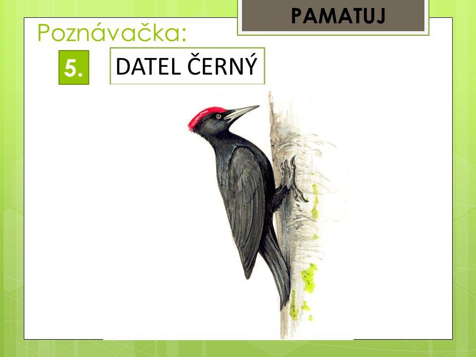 PAMATUJ Poznávačka: DATEL ČERNÝ 5.
