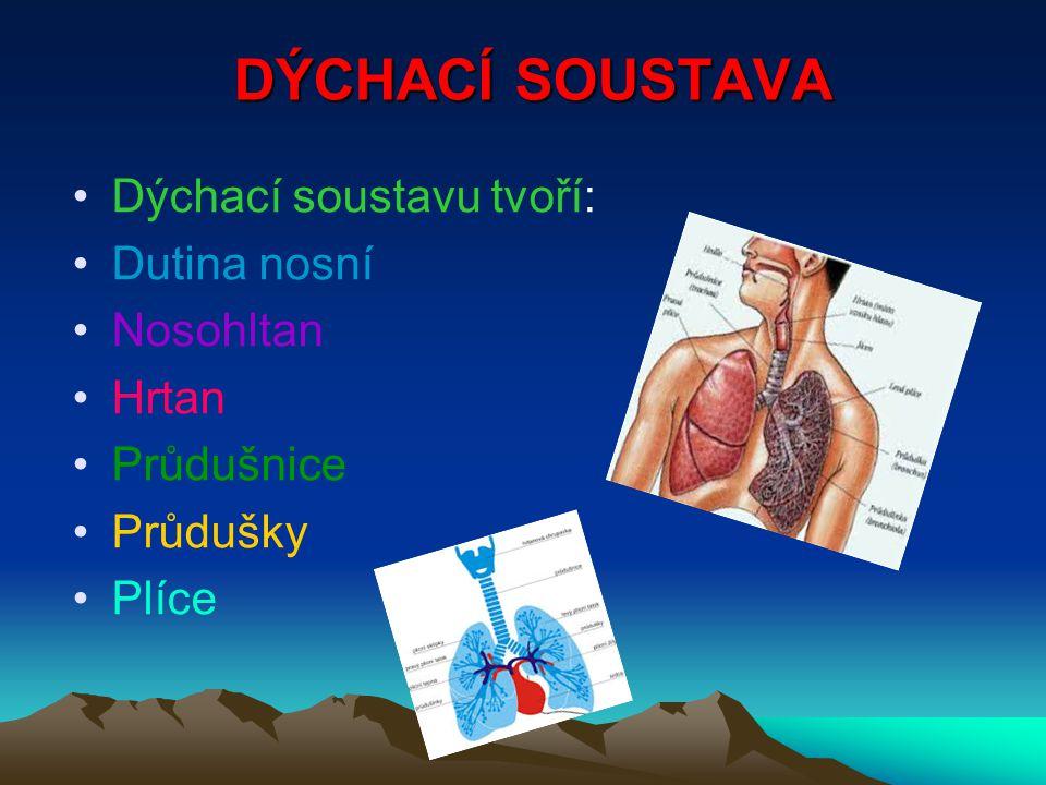 DÝCHACÍ SOUSTAVA Dýchací soustavu tvoří: Dutina nosní Nosohltan Hrtan