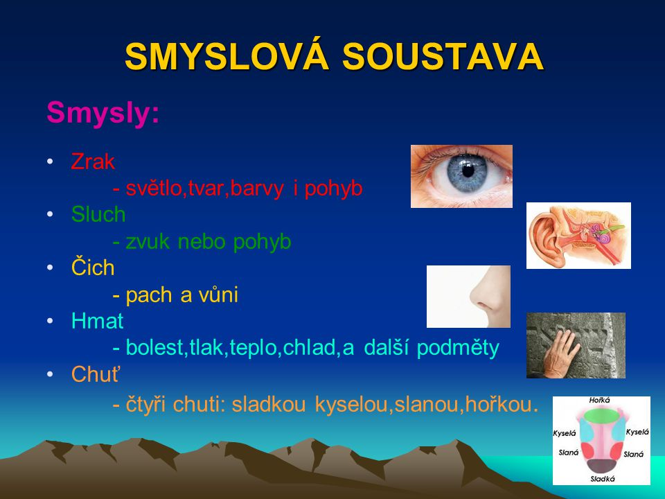 SMYSLOVÁ SOUSTAVA Smysly: Zrak - světlo,tvar,barvy i pohyb Sluch