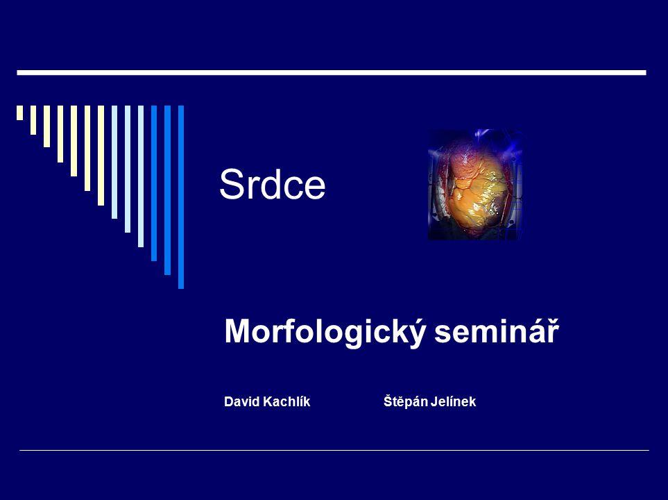 Morfologický seminář David Kachlík Štěpán Jelínek