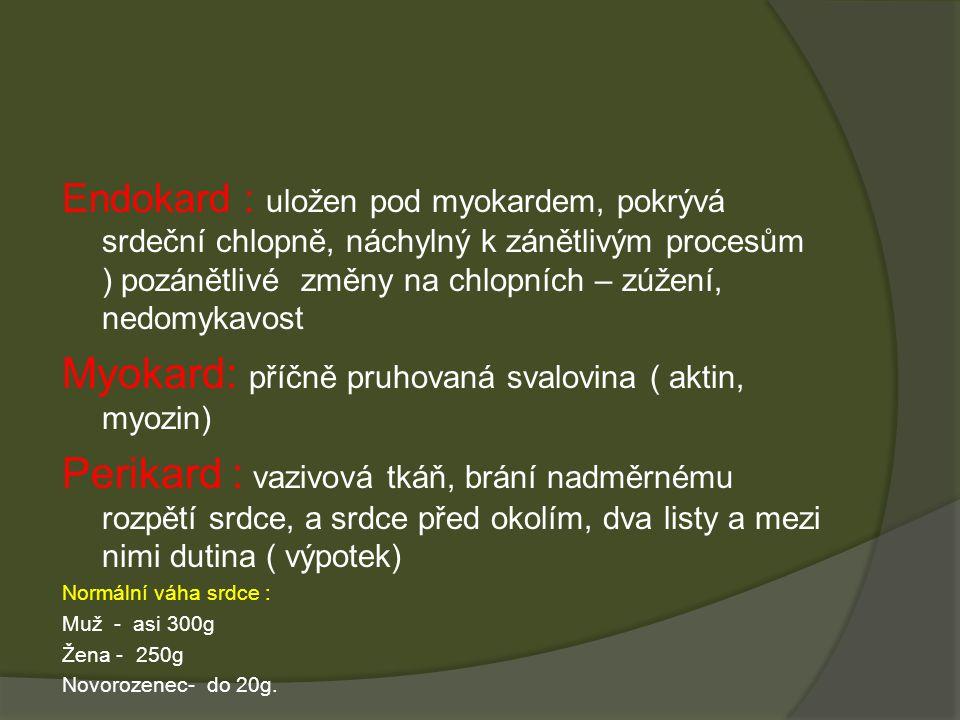 Myokard: příčně pruhovaná svalovina ( aktin, myozin)