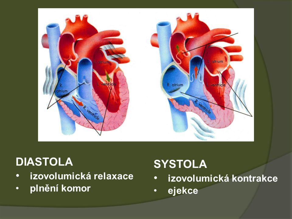 izovolumická relaxace SYSTOLA izovolumická kontrakce