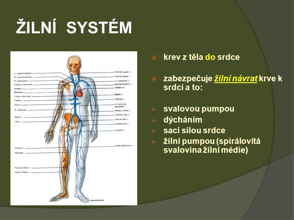 ŽILNÍ SYSTÉM krev z těla do srdce
