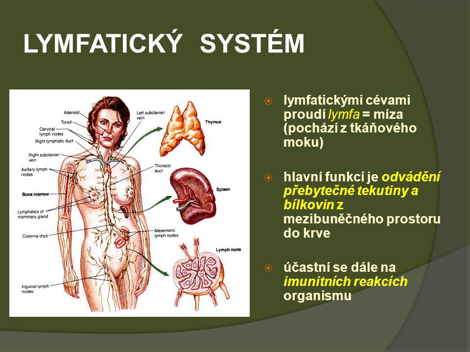 LYMFATICKÝ SYSTÉM lymfatickými cévami proudí lymfa = míza (pochází z tkáňového moku)