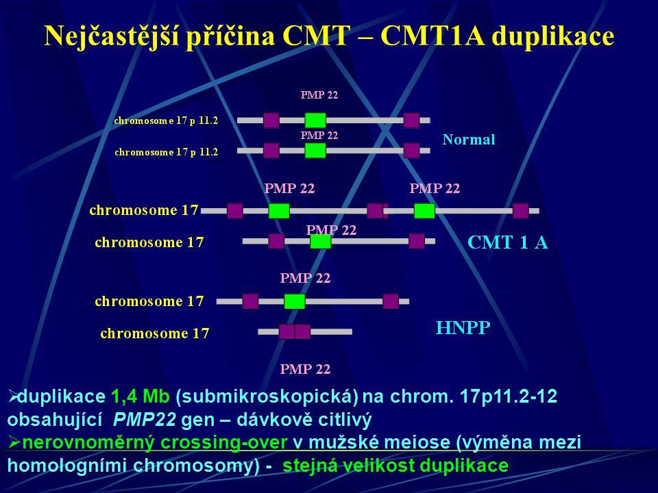 Nejčastější příčina CMT – CMT1A duplikace