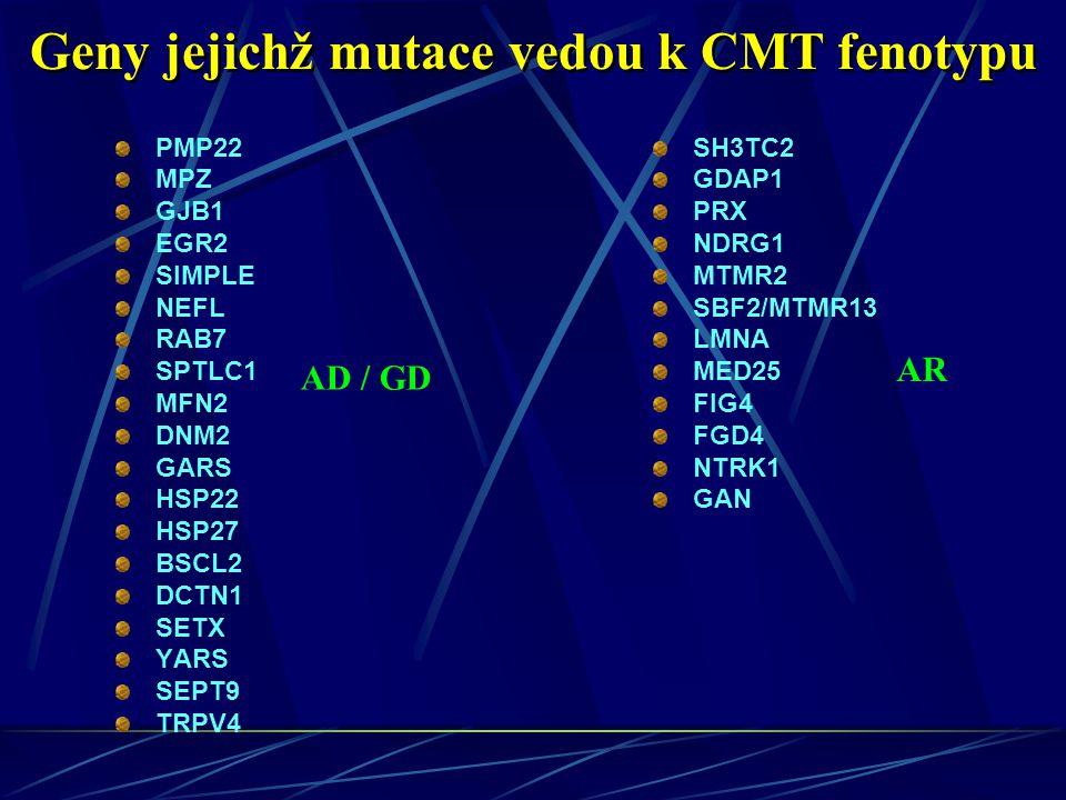 Geny jejichž mutace vedou k CMT fenotypu