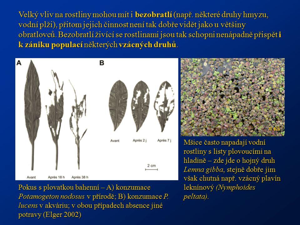 Velký vliv na rostliny mohou mít i bezobratlí (např