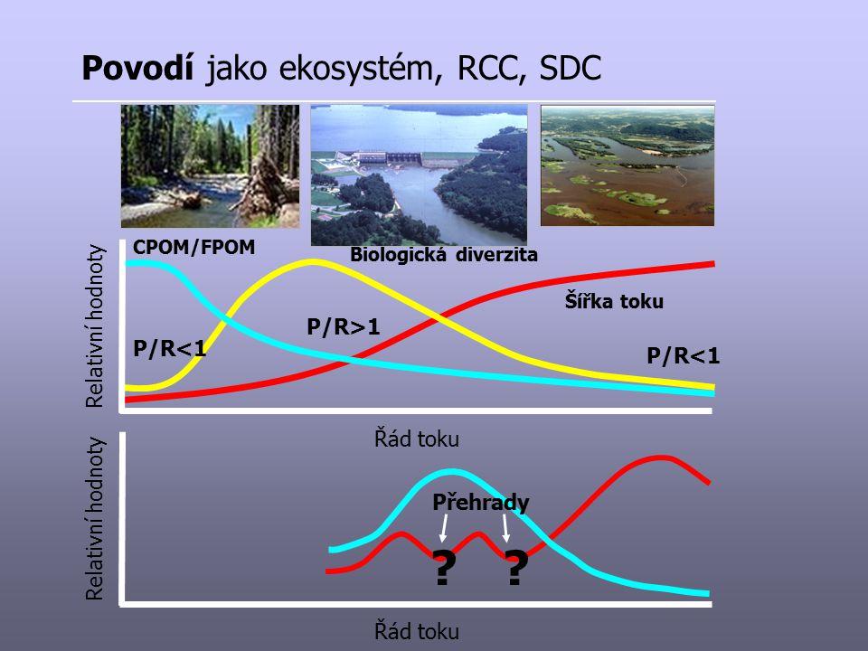 Povodí jako ekosystém, RCC, SDC Relativní hodnoty P/R>1 P/R<1