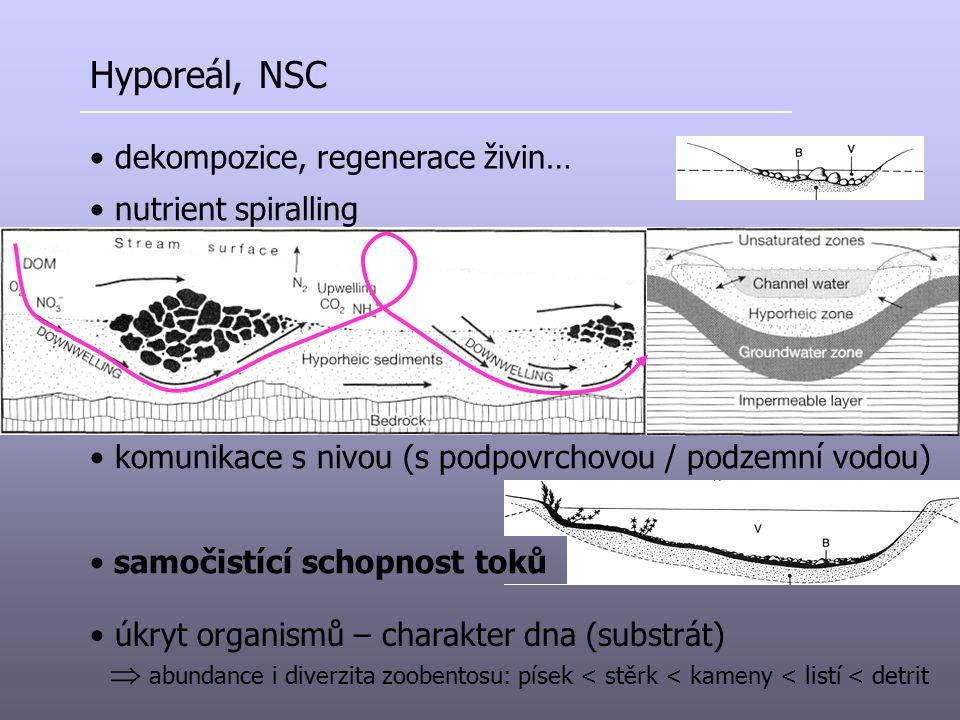 Hyporeál, NSC dekompozice, regenerace živin… nutrient spiralling