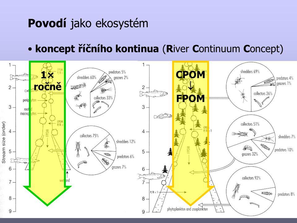 Povodí jako ekosystém koncept říčního kontinua (River Continuum Concept) 1× ročně CPOM  FPOM