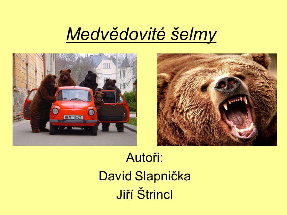 Autoři: David Slapnička Jiří Štrincl