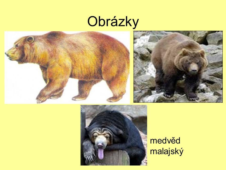 Obrázky grizzly medvěd ušatý medvěd malajský