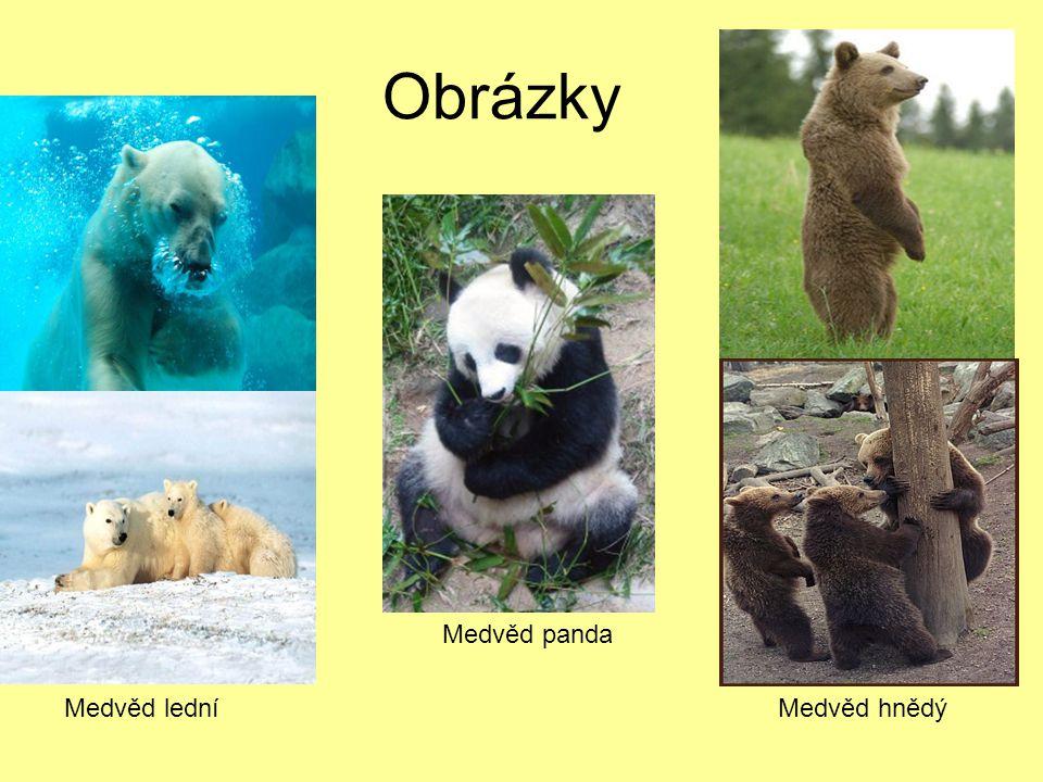 Obrázky Medvěd panda Medvěd lední Medvěd hnědý
