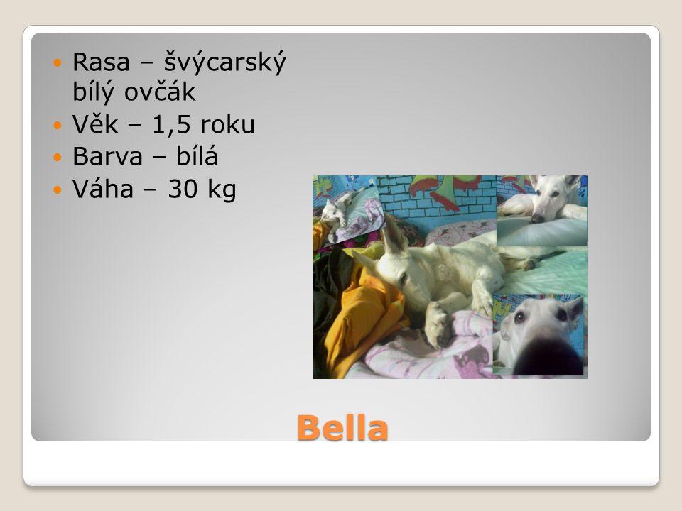 Bella Rasa – švýcarský bílý ovčák Věk – 1,5 roku Barva – bílá
