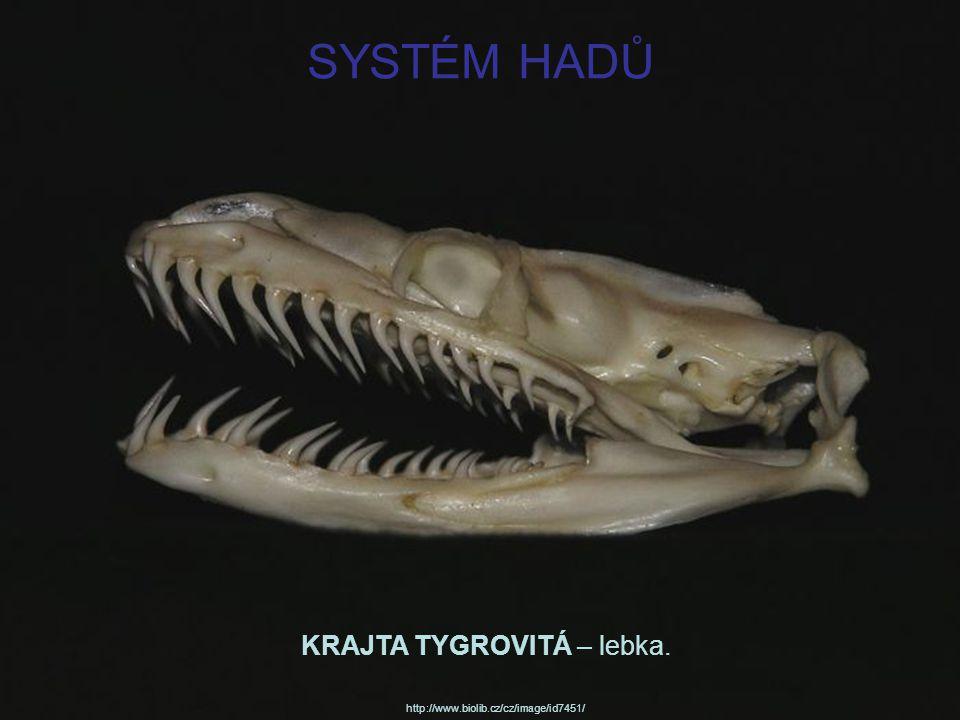 SYSTÉM HADŮ KRAJTA TYGROVITÁ – lebka.