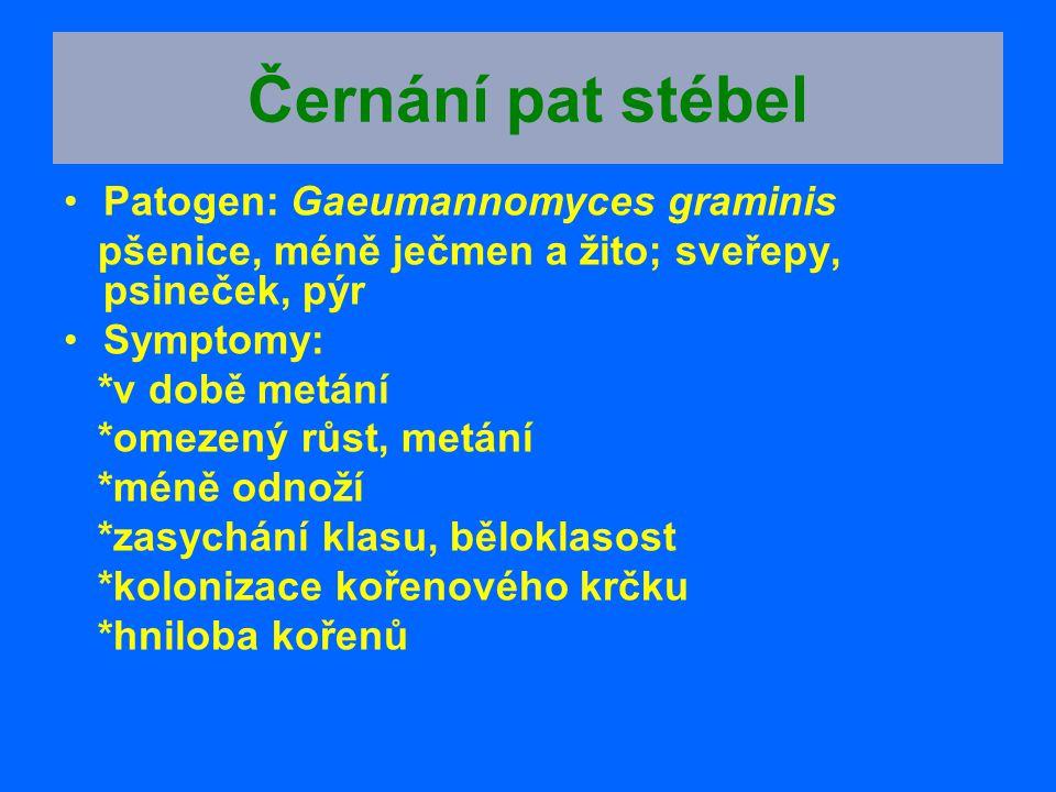 Černání pat stébel Patogen: Gaeumannomyces graminis