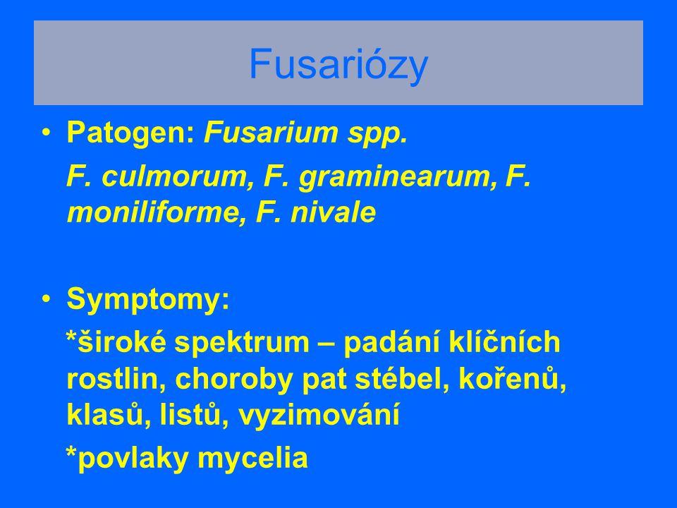 Fusariózy Patogen: Fusarium spp.