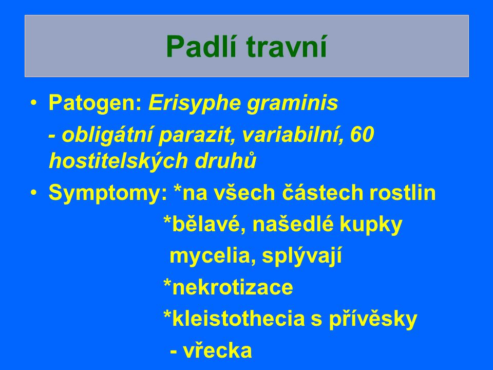 Padlí travní Patogen: Erisyphe graminis