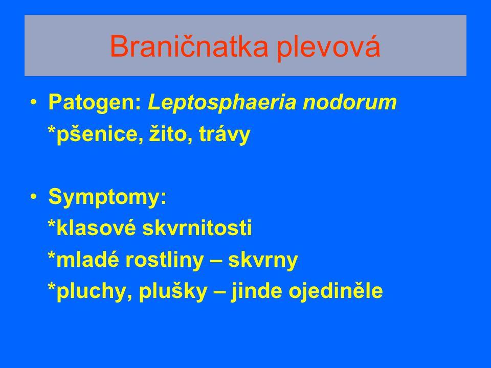 Braničnatka plevová Patogen: Leptosphaeria nodorum