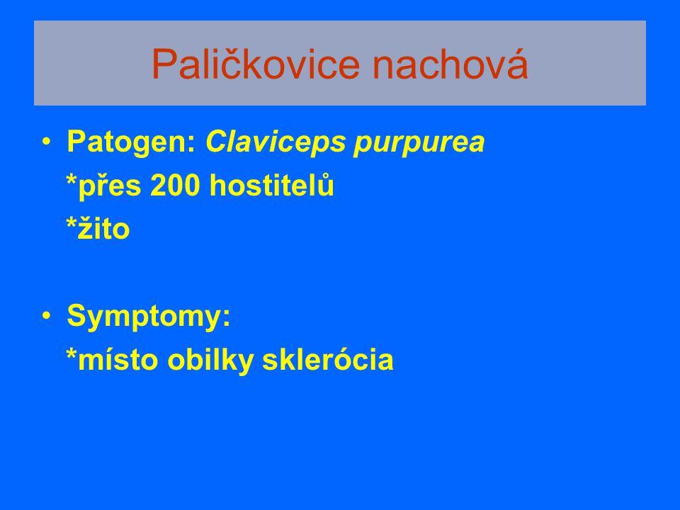 Paličkovice nachová Patogen: Claviceps purpurea *přes 200 hostitelů