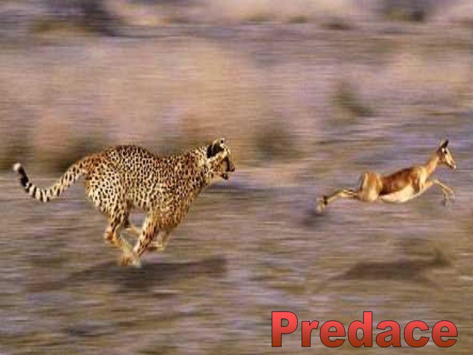 Predace