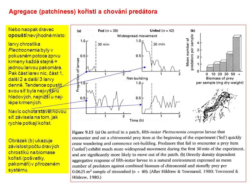 Agregace (patchiness) kořisti a chování predátora