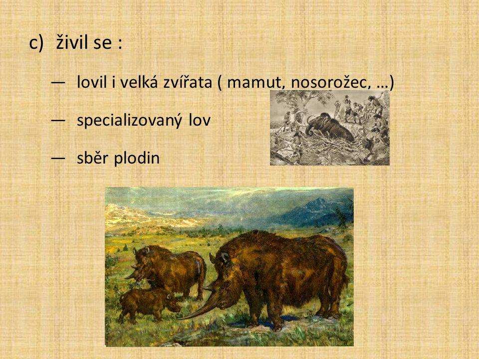 živil se : lovil i velká zvířata ( mamut, nosorožec, …)