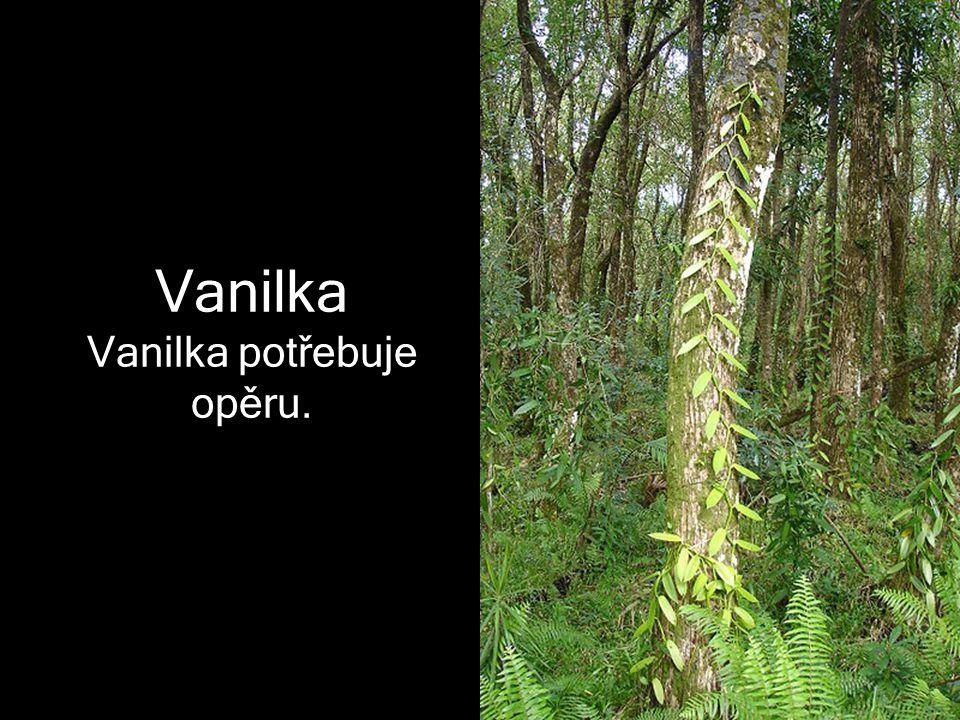 Vanilka potřebuje opěru.