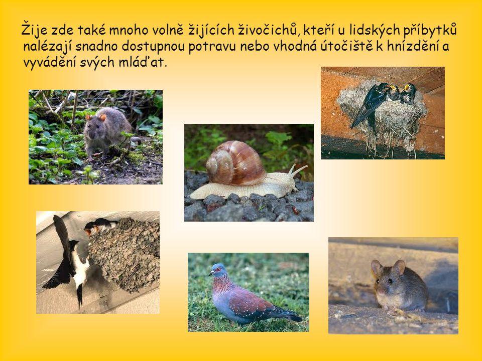 Žije zde také mnoho volně žijících živočichů, kteří u lidských příbytků nalézají snadno dostupnou potravu nebo vhodná útočiště k hnízdění a vyvádění svých mláďat.