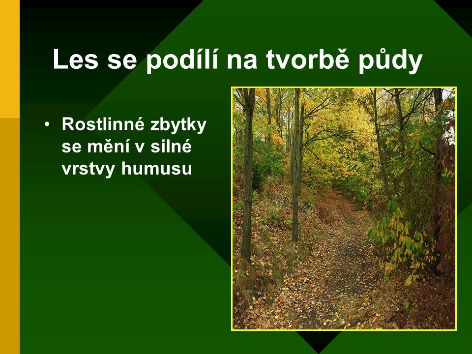 Les se podílí na tvorbě půdy
