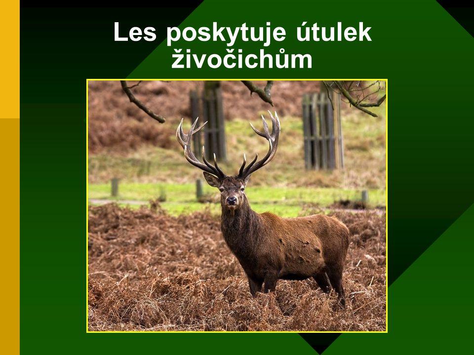 Les poskytuje útulek živočichům