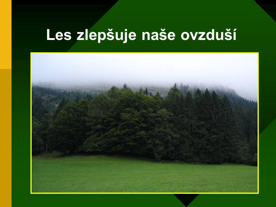Les zlepšuje naše ovzduší