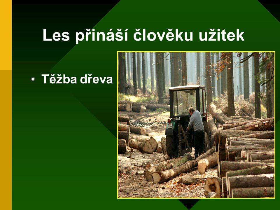 Les přináší člověku užitek