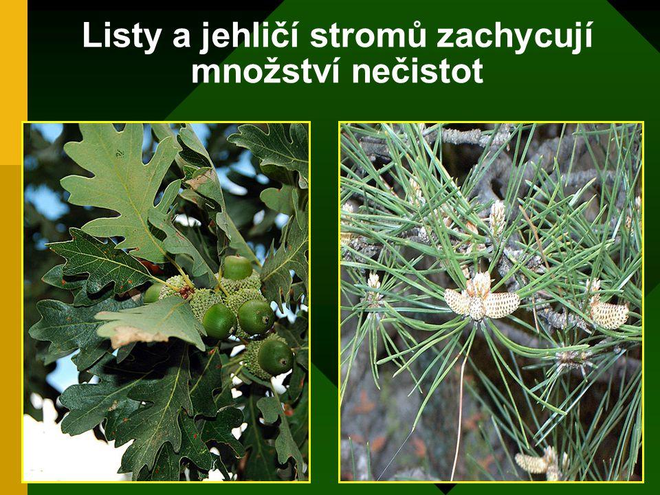 Listy a jehličí stromů zachycují množství nečistot
