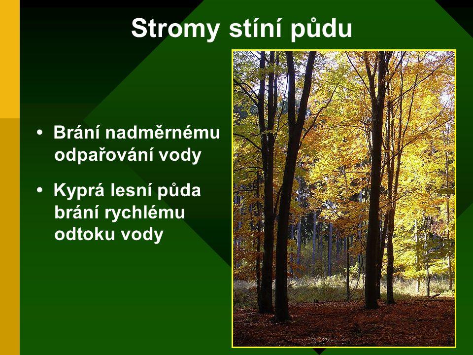 Stromy stíní půdu • Brání nadměrnému odpařování vody • Kyprá lesní půda brání rychlému odtoku vody