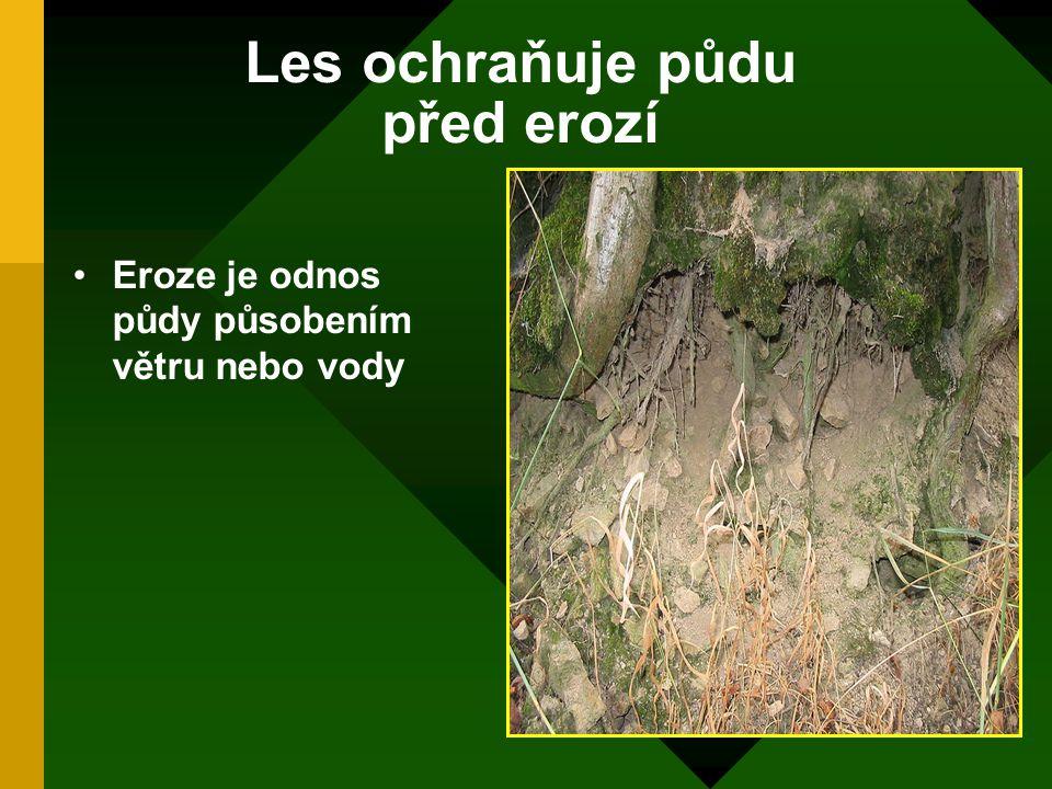 Les ochraňuje půdu před erozí