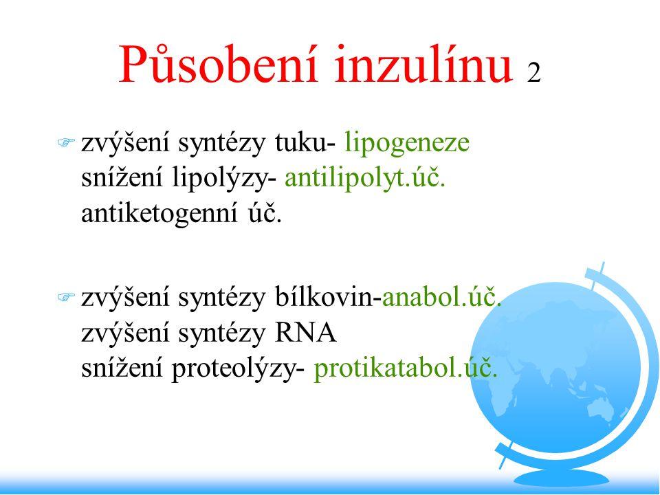 Působení inzulínu 2 zvýšení syntézy tuku- lipogeneze snížení lipolýzy- antilipolyt.úč. antiketogenní úč.